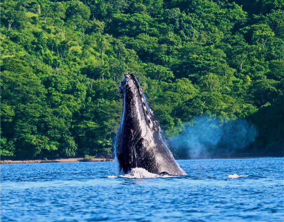 Whale watching at Marino Ballena, Uvita, Costa Rica