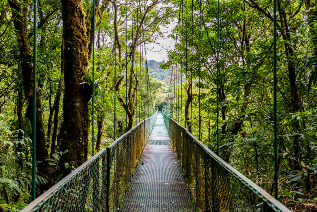Hanging Bridges in Cloudforest Costa Ric