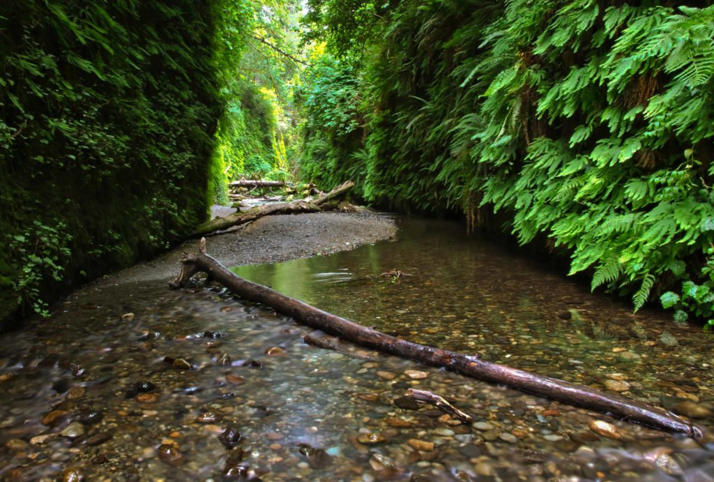 Fern Canyon in Redwood National Park, California