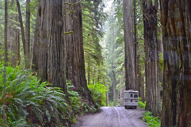 Camper van in the Redwoods, California
