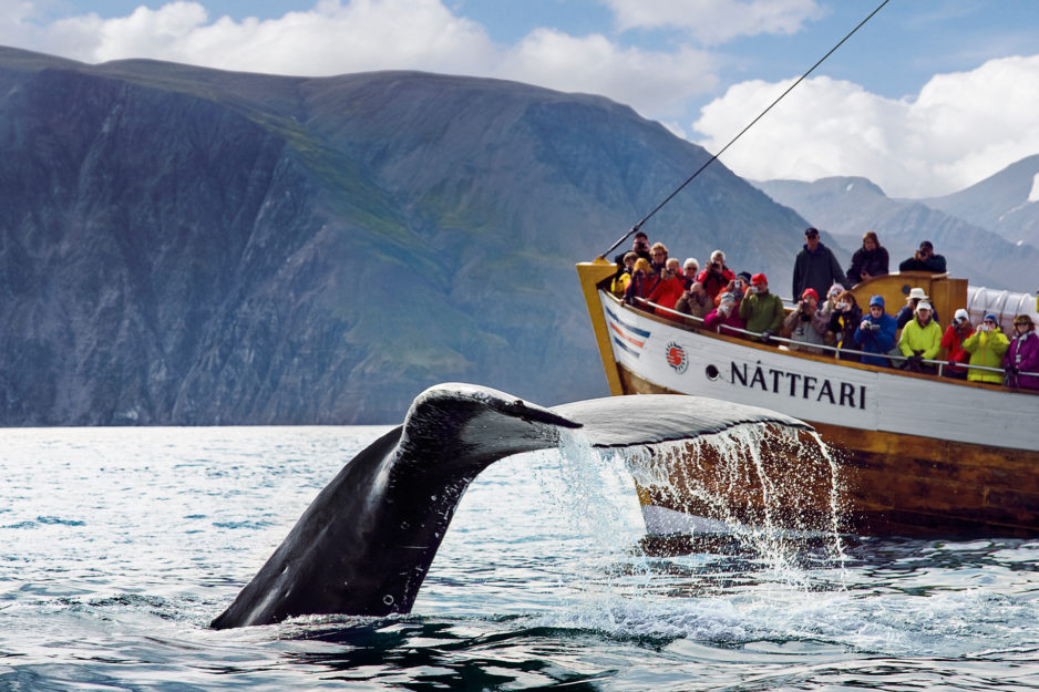 Whale watching from Husavik Iceland