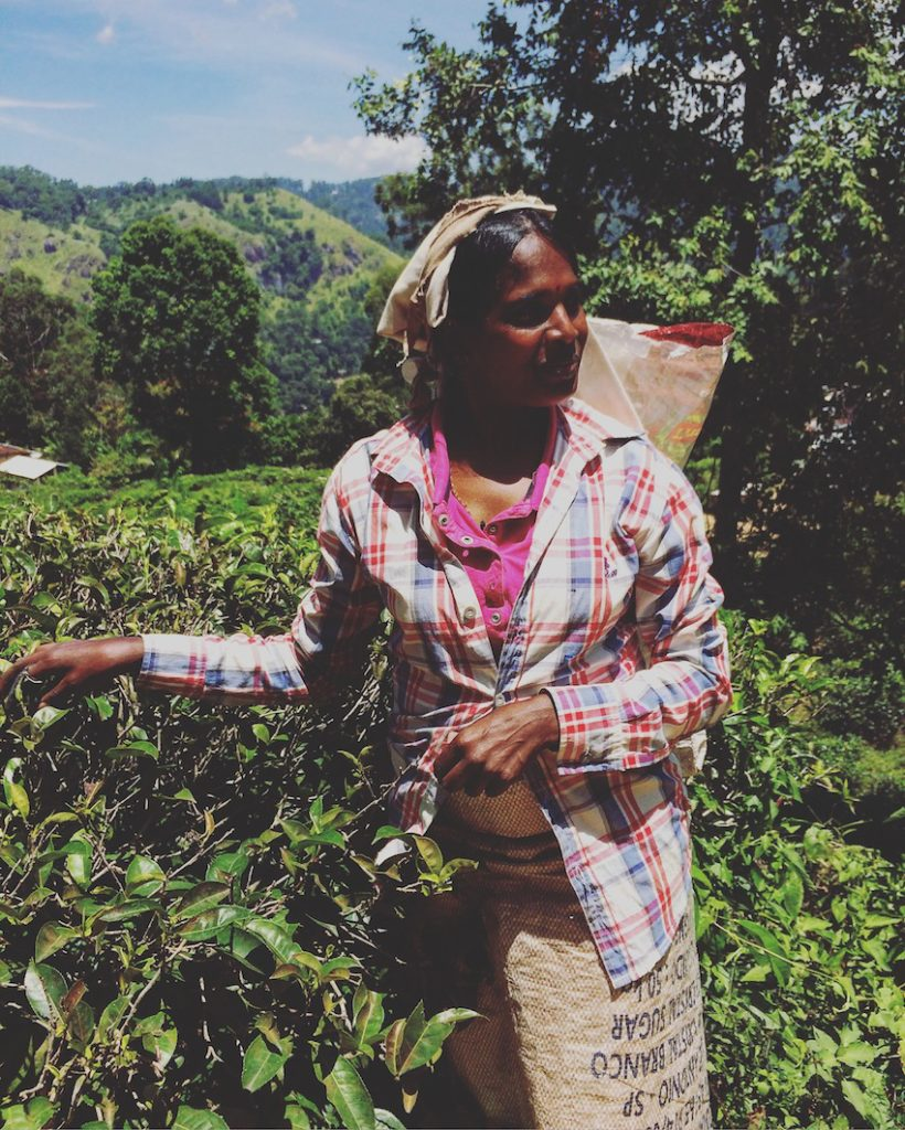 Tea pickers in the hill country of Sri Lanka